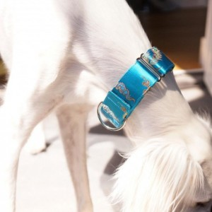 Martingale collar, Greyhound collar, Handmade Dog Collar