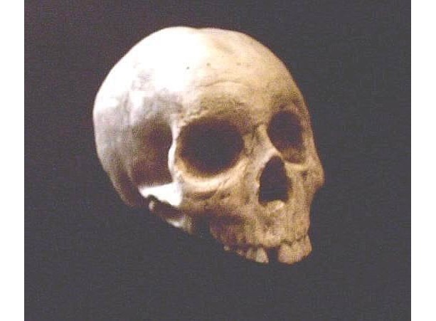 Human Half Skull Statue Skeleton Bone Gothic Halloween Prop Dark Haunt Decoration Pirate Bones Statuary Witchcraft Occult  Medical Horror