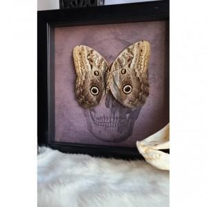 Wunderland shadowbox// Owl mimic butterfly // skull print