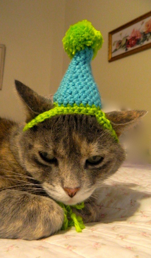 Crocheted Birthday Party Or Clown Hat For Cat Small Dog Costume Aqua And Lime Green