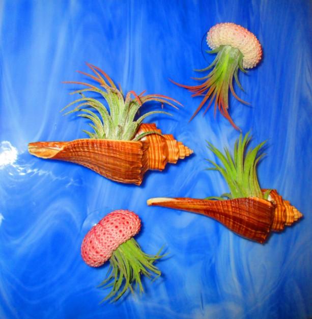 Jellyfish Air Plant Holders 4 Pack: AIR PLANTS BULK