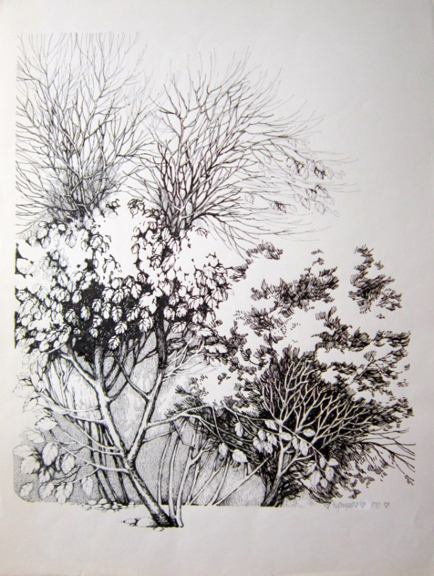 Pen & Ink Drawing of Leaves and Branches