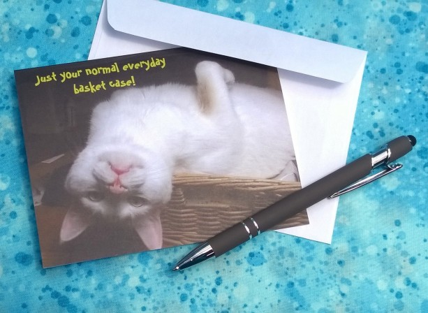 White Cat Photo Greeting Cards---Cat Notecard-Cat Notecards-Cat Card-Cat Cards- white cat-tabby cat-cat art stationery