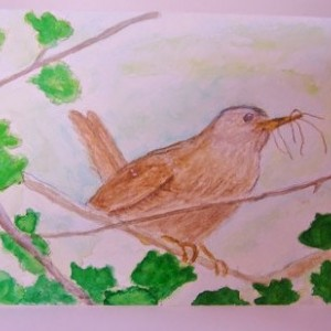 Wren Watercolor Card