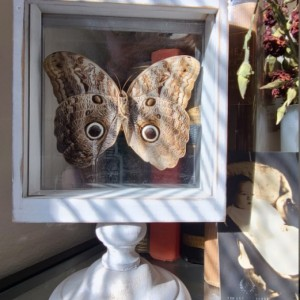 Owl Mimic Butterfly Floating Frame *ONE OF A KIND!