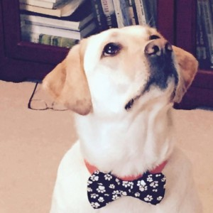 Black and white paw print pet bow tie