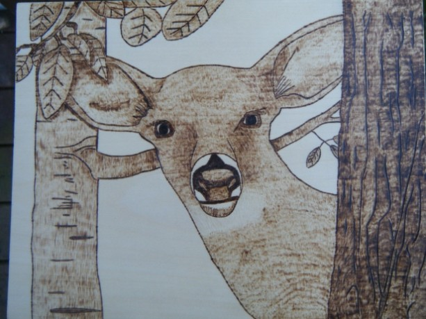 Pyrography doe deer