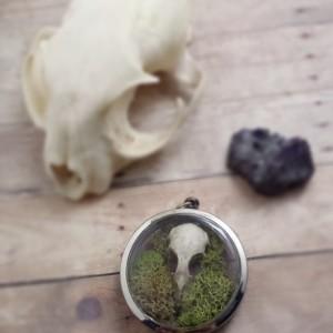 Real Bird Skull Ossuary Pendant