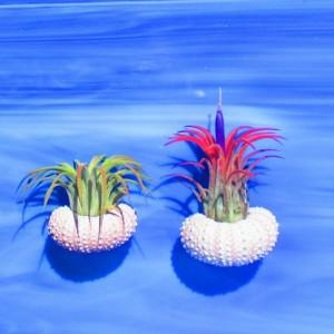 Air plants, air plant gift, Air plant holder, Air plant hanger, plant lovers gift, planter, Hanging jellyfish, air plant jellyfish, friend