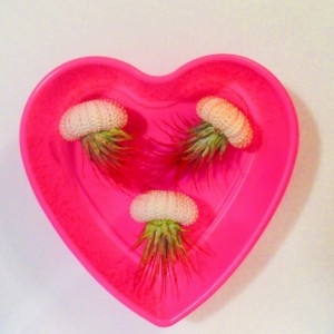 Air plant holder, Air plants, air plant gift, Air plant hanger, plant lovers gift, Valentines gift for her, Valentines gift box, Valentines