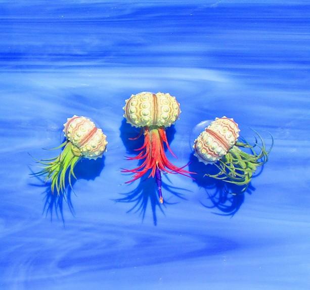 Jellyfish Air Plant Holders 4 Pack: AIR PLANT HOLDER