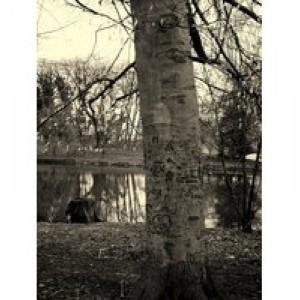 A Better Look At Trees- medium