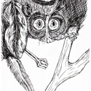 Tamarin South American Monkey Black and White Original Art Illustration Drawing Ink Nature Animal Home Decor 9 x 7