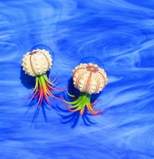 Jellyfish Air Plant Holders 4 Pack: AIR PLANTS