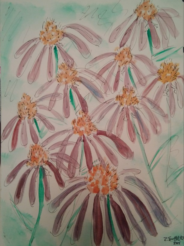 Coneflower Watercolor Illustration