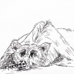 Grizzly Bear Black and White Original Art Illustration Drawing Ink Nature Woods Grizzly Bear Animal Home Decor 10 x 7