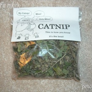 FOUR Natural Bags of Catnip