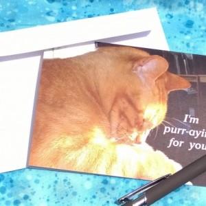 Orange Stripe Praying Cat  photo Greeting Cards-