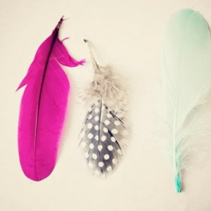 Colored Feathers - 8x10 photograph - Home Decor - fine art print - vintage photography - summer trends