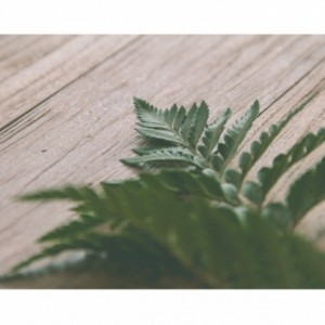 Fern Photograph, 8x12 Print, Fine Art Nature Photography, Still Life Photography, Natural Home Decor, Plant Decor, Green Photography