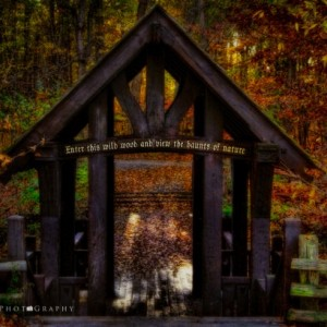 The Haunts of Nature  - Autumn Color Photography - 8 x 12 Print