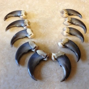 Real Bear claw pendant FRONT claw