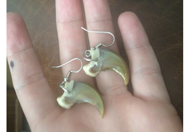 Real bear claw earrings Native American made