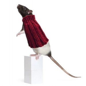 Pet Rat Sweater Accessories