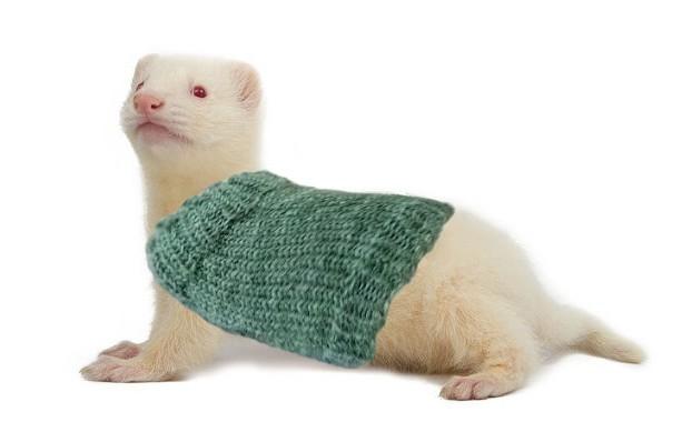 Ferret Sweater