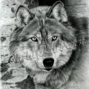 Wolf Art Print Watchful Eyes by Carla Kurt Signed wwao ebsq drawing painting