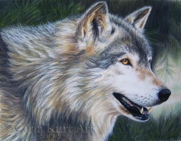 Timber Wolf by Carla Kurt signed art print