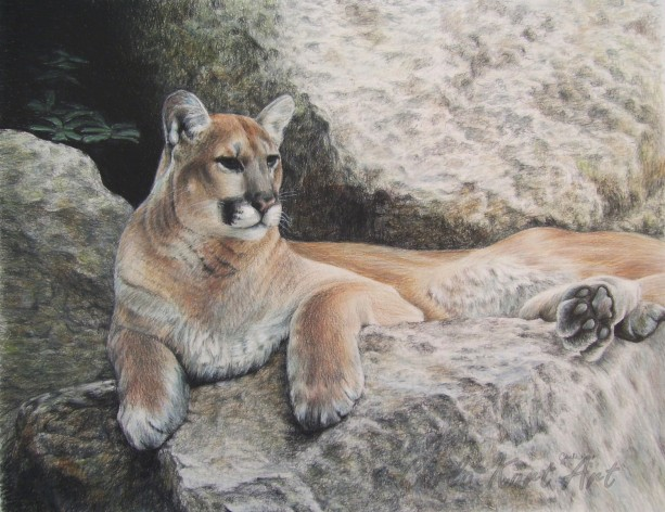COUGAR HAVEN by Carla Kurt Signed Print 11 X 14