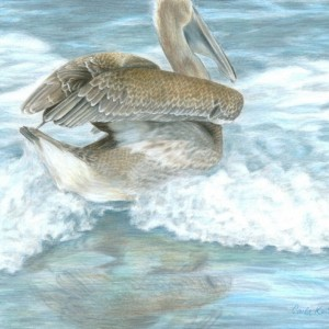 Bird Art PELICAN SURF Original Artwork by Carla Kurt