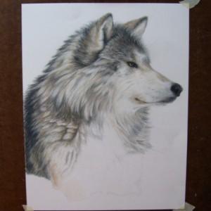Wolf Art Original Artwork by Carla Kurt