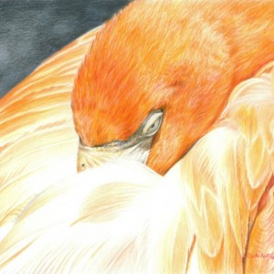 Bird Art SLEEPING FLAMINGO Original Artwork by Carla Kurt