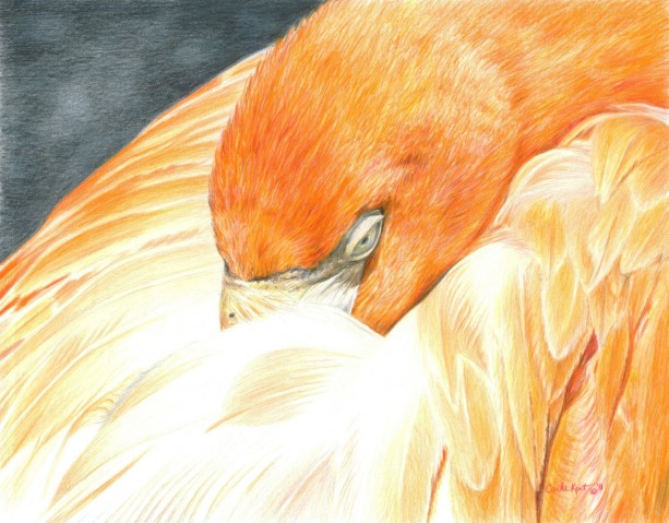 Bird Art SLEEPING FLAMINGO Original Artwork by Carla Kurt
