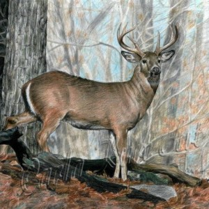 WHITETAIL BUCK by Carla Kurt Signed print
