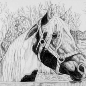 Custom Pet Portrait  graphite pencil horse, dog, cat, any pet, multiple pets ! 8x10. dog portrait, cat portrait, horse portrait, ooak gift