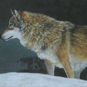 A COLD WINTER NIGHT wolf art print by Carla Kurt