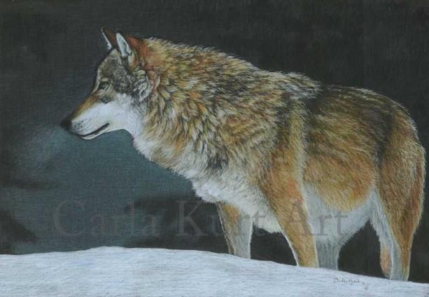A COLD WINTER NIGHT wolf art print by Carla Kurt