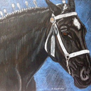 Original Percheron Draft horse prismacolor painting drawing 8x10. draft horse painting, horse art, percheron horse, show horse, black horse