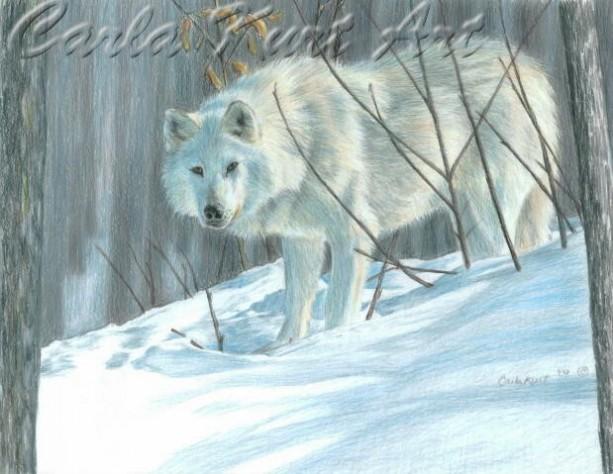 WINTER WOLF by Carla Kurt Signed print