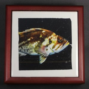 Mr. Fish Tile Frame