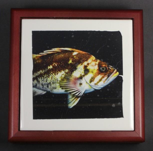 Mr. Fish Tile Frame