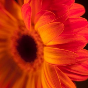"Photograph Print ""Vibrancy"" - Flower Photography"