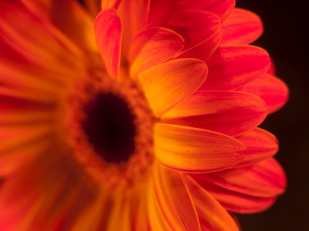"Photograph Print ""Vibrancy"" - Flower Photography"
