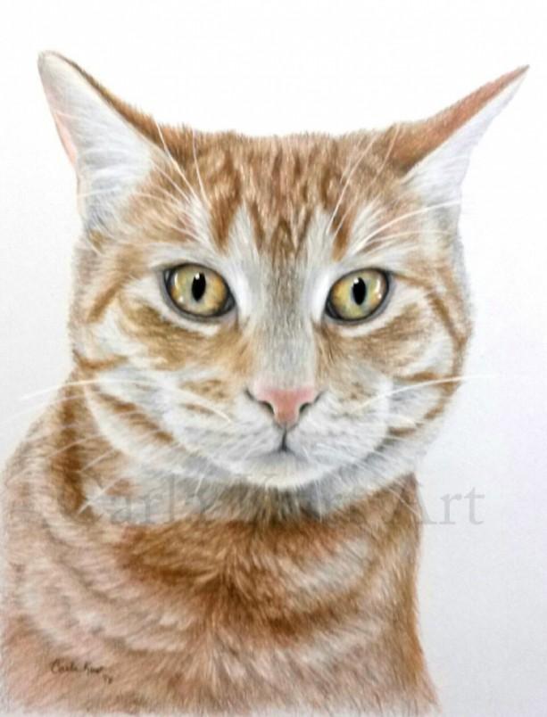 Hand Drawn Pet Portrait Custom  Colored Pencil Cat Dog Horse Memorial Best Shop