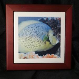 Mr. Bluefish Rosewood Tile Frame