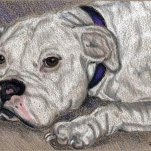 Custom Pet Portrait 5x7 dog, cat, horse any pet! Prismacolor painting drawing. cat portrait, dog portrait, horse portait, ooak gift
