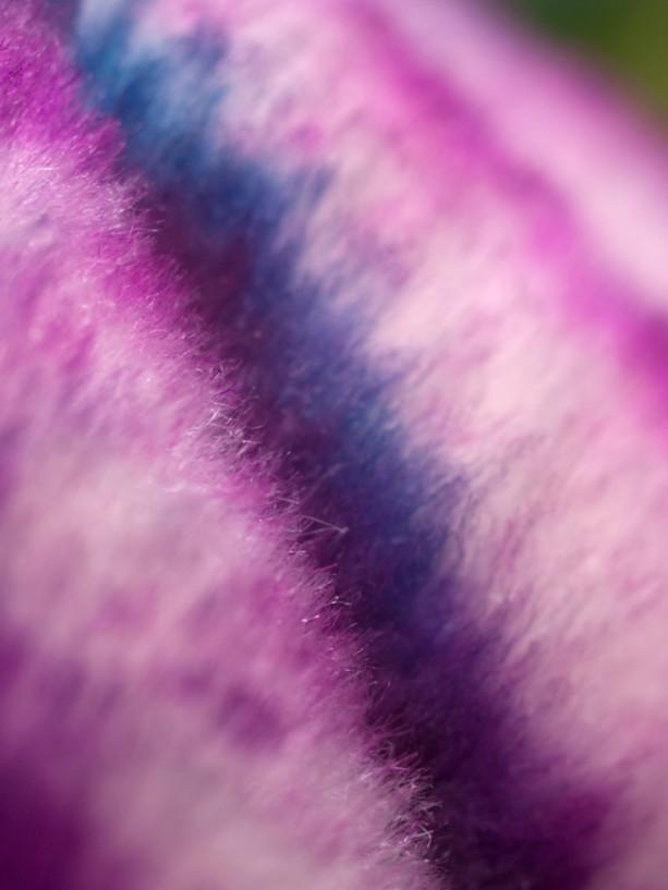 "Photograph Print ""Purple"" - Macro - Abstract Photography"